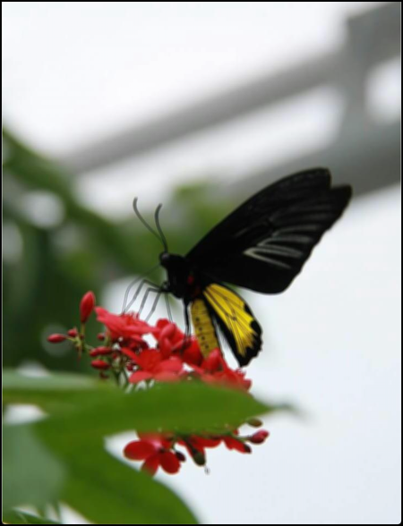 Blurred butterfly